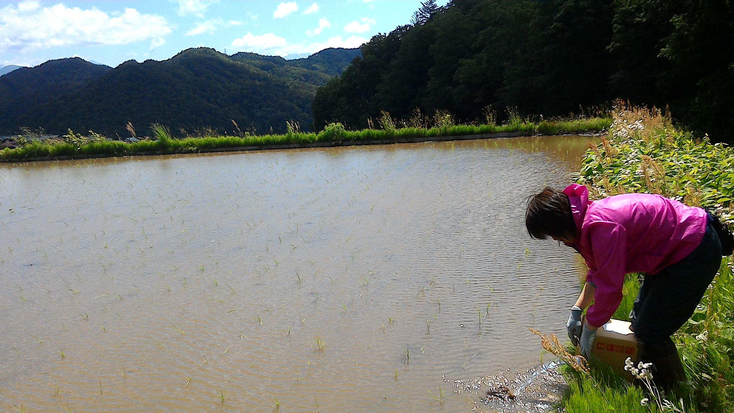 お取り引き先のオルター様よりご依頼の「オーブス水」の栽培試験開始です!