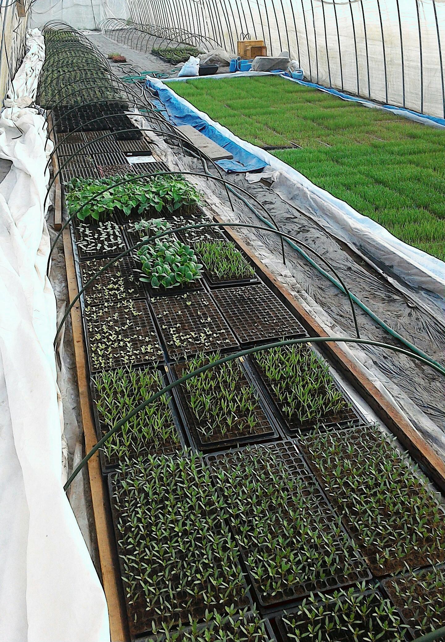 おはようございます。 お米や野菜の苗さん達が元気に育ってくれています。o(^-^)o
