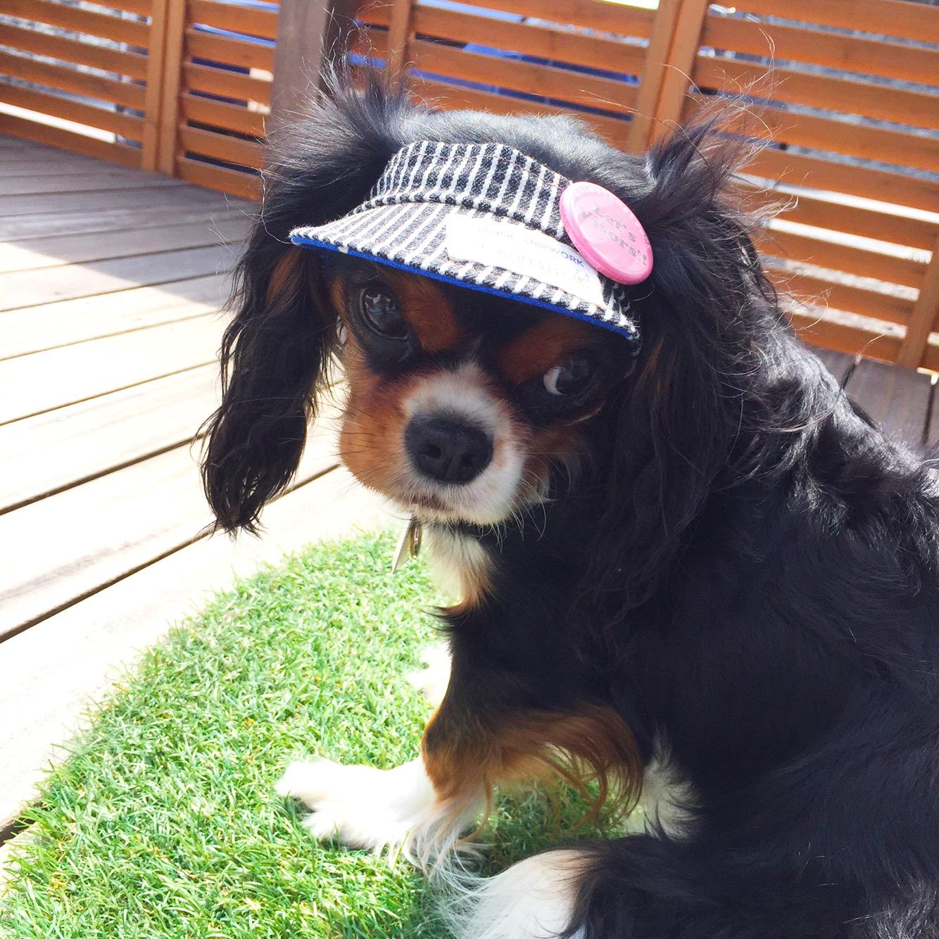 わんちゃんの夏に、犬用サンバイザー!