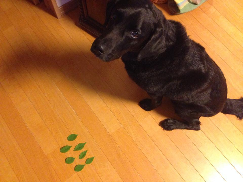 高齢犬の療養食