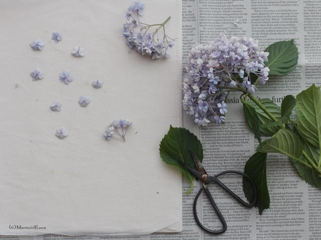押し花でタイポグラフィにしたポストカードを飾る