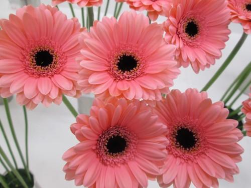 花束って相場はどれくらいですか?