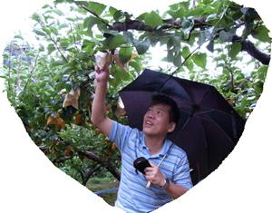 出ました! 典型的な語呂合わせ。梨が無しです。