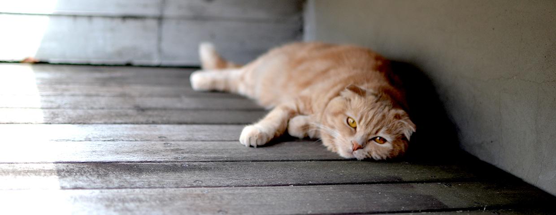 DecoraMeow デコラミュウ -おしゃれな猫用品の製作販売・輸入販売紹介画像1